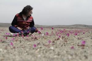viajar-casi-gratis-por-Chile-desierto-florido-600x400